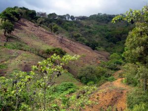 Slope in La Sepultura Biosphere Reserve